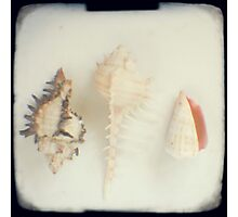 Shell trio Photographic Print