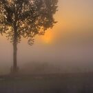 A Tree, A Silhouette, and a Sunrise.  (3) by Larry Lingard-Davis