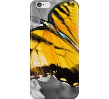 Tiger Swallowtail Butterfly 2 iPhone Case/Skin