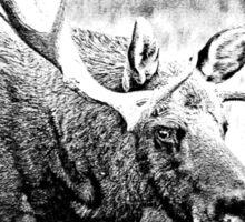 Bull Moose. Wildlife Moose. Moose Antlers. Canadian Moose. Alaskan Moose. Sticker