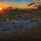 Reflecting on a Duba Plains sunset by Owed to Nature