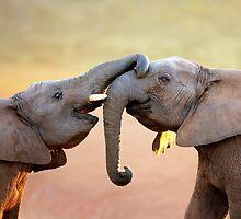 Elephants touching by Johan Swanepoel