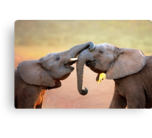 Elephants touching Canvas Print