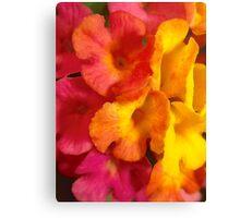 Macro mini flowers Canvas Print