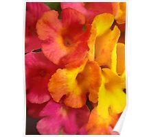 Macro mini flowers Poster
