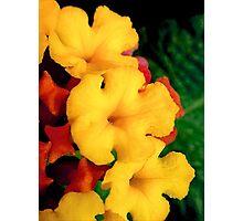 Mini macro flowers Photographic Print