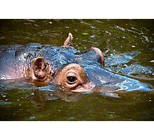 Happy Hippo Portrait Photographic Print