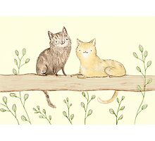 Cats on the Fence Photographic Print