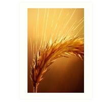 Wheat macro Art Print