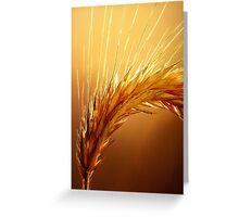 Wheat macro Greeting Card