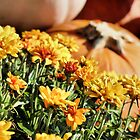 Mums and Pumpkins by debidabble