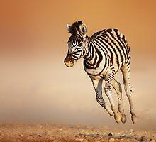 Baby zebra running by johanswanepoel