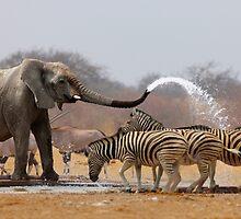 Animal humour by johanswanepoel