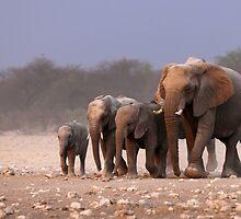 Elephant herd by Johan Swanepoel
