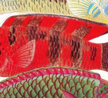 Parrot fish - Papageien Fische Sticker