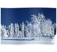 The Snow Paradise Fir Trees Poster