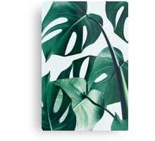 Monstera #redbubble #artprints Metal Print