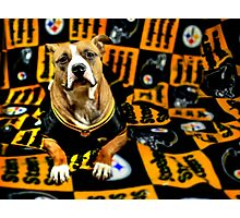 Steeler Pup Photographic Print