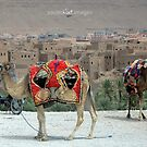 Moroccan transport by Julie Sleeman