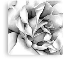 Soft Rose - Ink painting Canvas Print