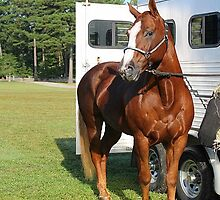 Deer Run Horse Show Club Sept. 20, 2014 (22) by DLitefulImagery