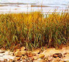 Autumn Beach Grass by Linda  Makiej