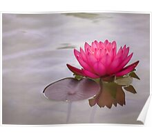 Serenity in pink Poster