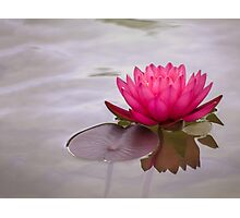 Serenity in pink Photographic Print