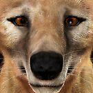 Thylacine by Vac1