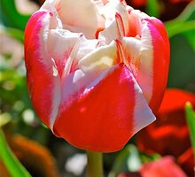Unfurling by Penny Smith