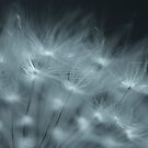 Dandelion Seed by Roxane Bay
