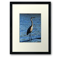 Egret In Blue Framed Print