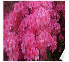 Bright Pink Springtime Blossoms Poster