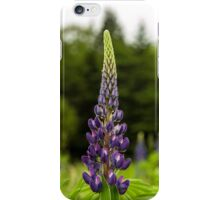 Trio of Lupins iPhone Case/Skin