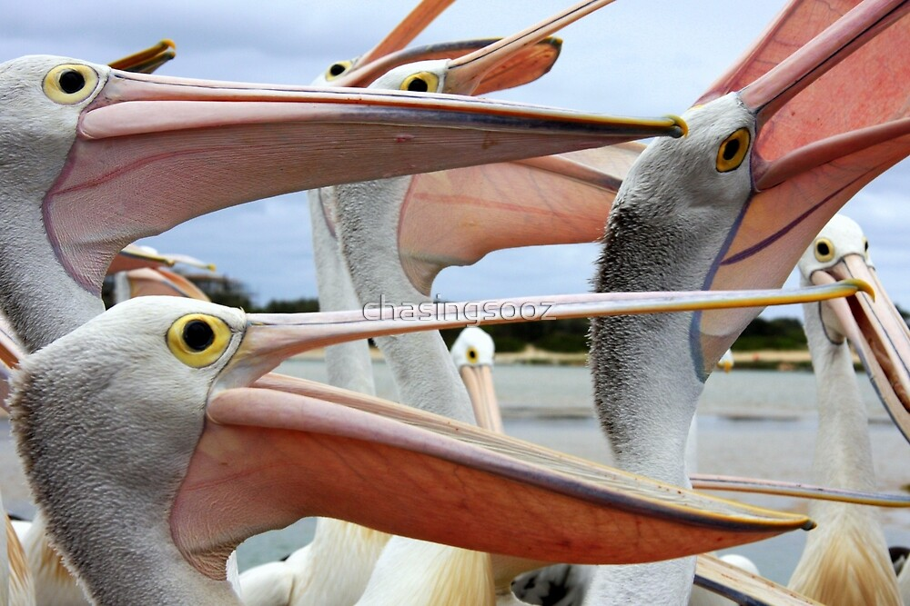 The Pelican Song by chasingsooz