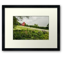 Lupins in the ditch Framed Print