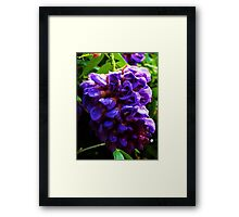 Hanging Purple Framed Print
