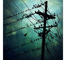 Bird City Photographic Print
