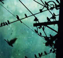 Bird City Sticker