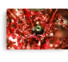 Deadly Thistles Canvas Print