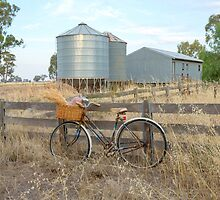 Bike riding in the country gathering bunches wheat.... by mitpjenkeating