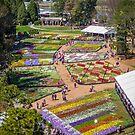 Floriade 2014 - Canberra - ACT - Australia by TonyCrehan