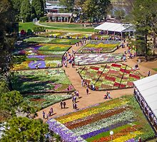 Floriade 2014 - Canberra - ACT - Australia by TonyCrehan