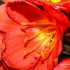 Spring Flower by Leonie Morris