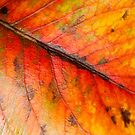 Abstract Leaf Color Study 1 by Kari Sutyla