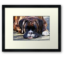 Such is Life -Boxer Dogs Series- Framed Print