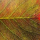 Abstract Leaf Color Study 4 by Kari Sutyla