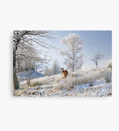 Glen Shiel Misty Winter Deer Metal Print