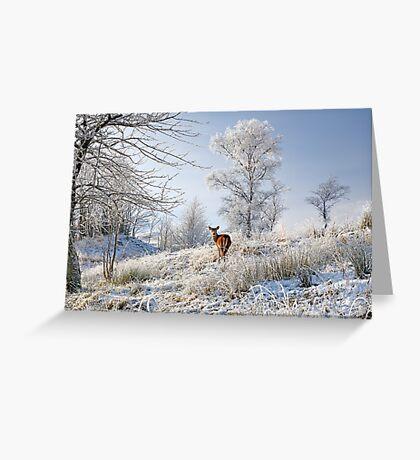 Glen Shiel Misty Winter Deer Greeting Card