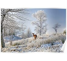 Glen Shiel Misty Winter Deer Poster